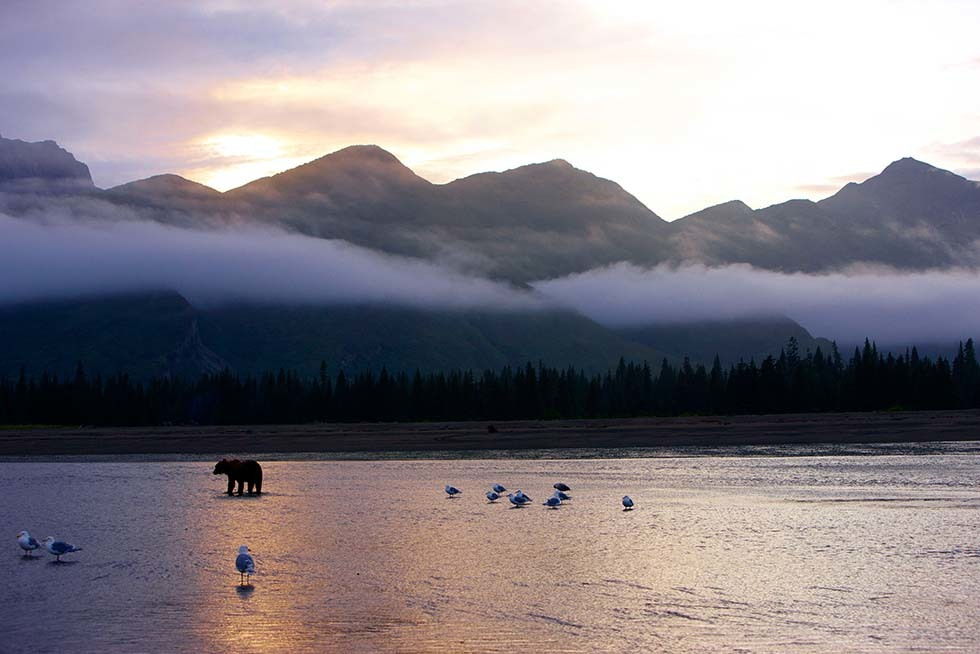 Silver Salmon Creek