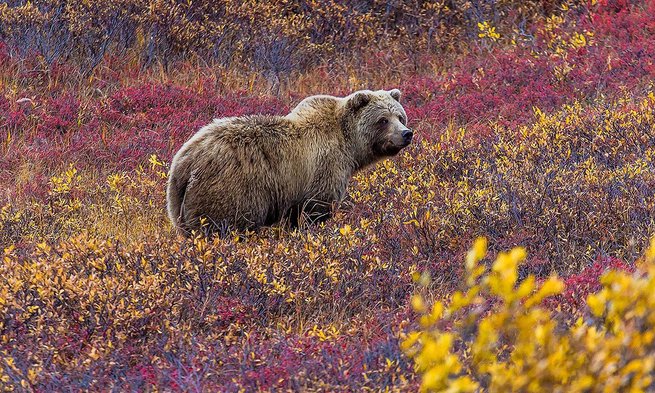 Inspiratie Bears